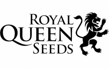 ROYAL QEEN SEEDS
